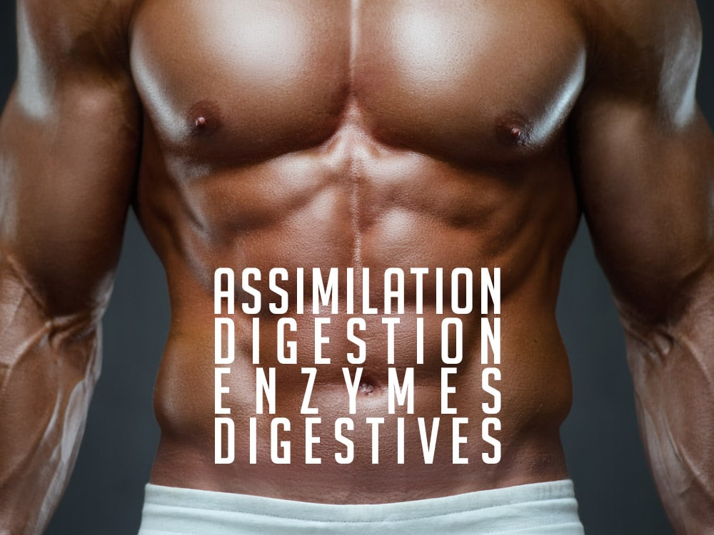 DIGESTION ASSIMILATION & ENZYMES DIGESTIVES
